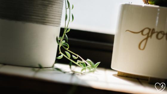 Hoe laat je je bedrijf groeien? 4 tips om onkruid te wieden